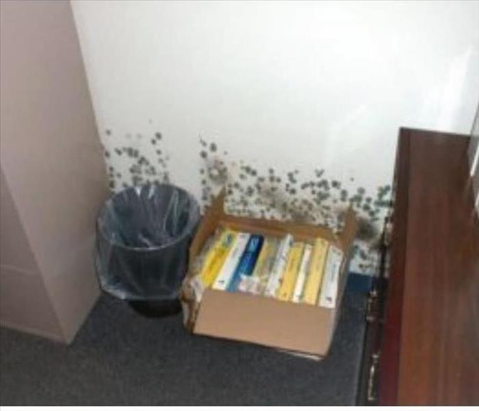 box of books, cabinets, and a trash can against a moldy wall